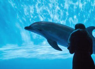 Delfin Delfine Japan