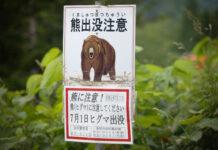 Japans Bären sorgen für immer mehr Vorfälle