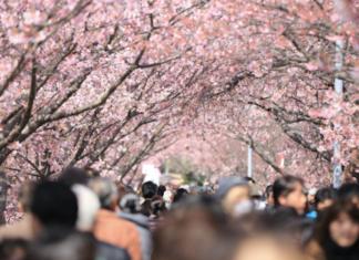 Tokyo verbietet Hanami-Partys wegen Corona