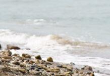 Wasser aus Fukushima Daiichi soll endgültig im Meer entsorgt werden